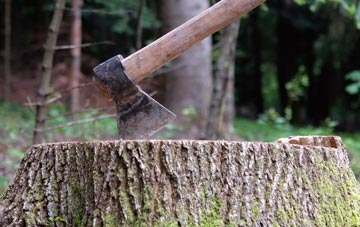 avoid diy stump removal