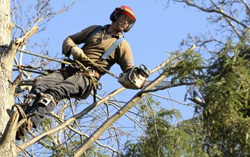 hiring experienced Bedfordshire tree surgeons
