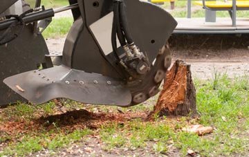 professional Bedfordshire stump grinding services