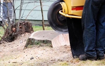 rated Bedfordshire tree stump removal companies