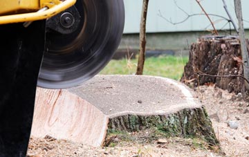 tree stump grinding Bedfordshire