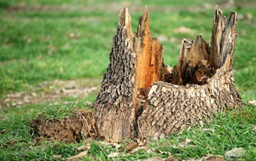 tree stump removal Bedfordshire