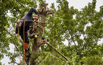 tree surgeon Bedfordshire