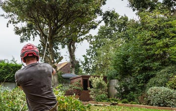 what is a tree surgeon?