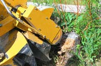 Bedfordshire tree stump grinding services