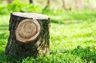Bedfordshire tree stump removal services