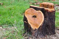 free Bedfordshire tree stump removal quotes