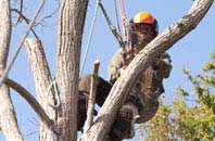 Bedfordshire tree surgeon services