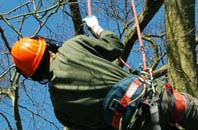 free Bedfordshire tree surgeon quotes